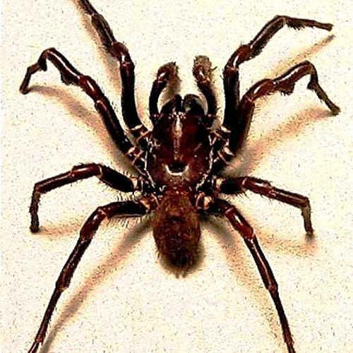 Spider_X